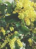 Flores da primavera Fotografia de Stock