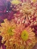 Flores da queda Imagens de Stock Royalty Free