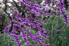 Flores da queda Imagens de Stock