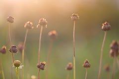 Flores da queda Imagem de Stock