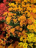Flores da queda fotos de stock royalty free