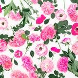 Flores da rosa do rosa e pétalas cor-de-rosa isoladas no fundo branco Configuração lisa, vista superior Teste padrão floral Fotografia de Stock Royalty Free