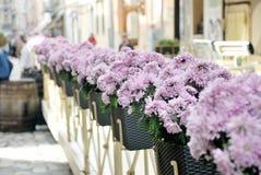 Flores da rua Fotografia de Stock