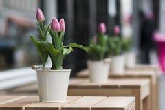 Flores da rua Fotos de Stock Royalty Free