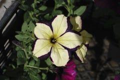 Flores da rua na caixa fotografia de stock