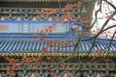 Flores da sumaúma da cidade Imagem de Stock