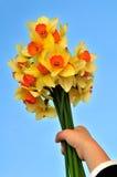 Flores da terra arrendada da mão Imagens de Stock