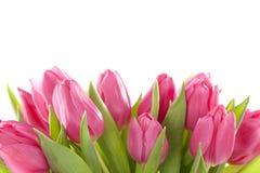 Flores da tulipa Fotografia de Stock
