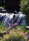 Flores da tulipa da mola Imagem de Stock