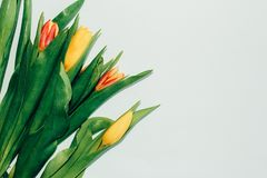 Flores da tulipa no fundo cor-de-rosa branco Floresce a composição fotos de stock royalty free