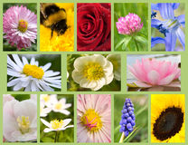 Flores da variedade Foto de Stock Royalty Free