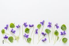 Flores da viola na lona de arte Fotografia de Stock Royalty Free