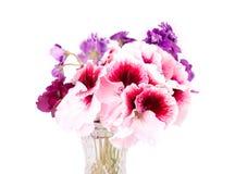 Flores da violeta e do gerânio Imagens de Stock Royalty Free
