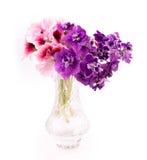 Flores da violeta e do gerânio Fotografia de Stock