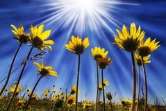 Flores das horas de verão Fotos de Stock Royalty Free