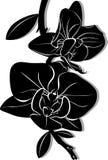 Flores das orquídeas ilustração do vetor