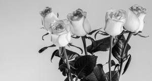 Flores das rosas em um fundo bonito, ainda vida fotos de stock