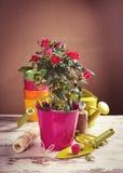 Flores das rosas vermelhas com ferramentas de jardinagem Fotografia de Stock Royalty Free