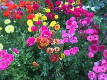 Flores de Alhambra Fotografía de archivo libre de regalías