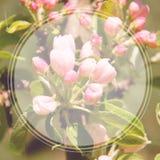 Flores de Apple en la plantilla de la bandera del jardín Foto de archivo