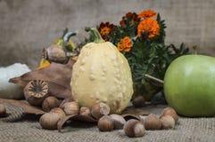 Flores de Apple, de la calabaza, de la avellana, de la amapola y de los tagetes a bordo Fotografía de archivo libre de regalías