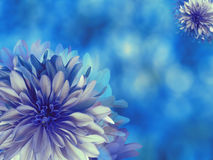 flores de Azul-turquesa, no fundo borrado azul closeup Composição floral brilhante, cartão para o feriado colagem do fluxo Imagem de Stock Royalty Free