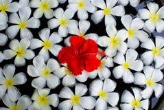 Flores de Bali imagen de archivo libre de regalías