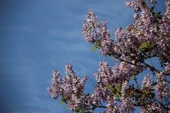 Flores de Bell florecientes de florecimiento y cielo nublado foto de archivo