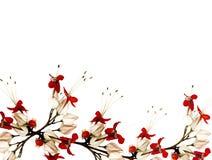 Flores de borboleta vermelhas e pretas Fotos de Stock Royalty Free