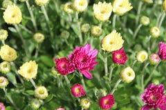 Flores de brotamento fotografia de stock