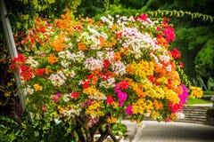 Flores de Bush Imagen de archivo libre de regalías