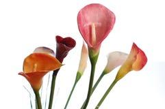Flores de Cartucho Fotografía de archivo libre de regalías
