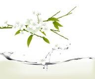 Flores de cereja brancas ilustração royalty free