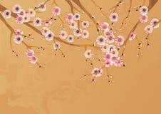 Flores de cereja da mola Fotos de Stock