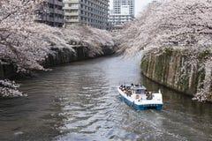 Flores de cereja em Tokyo fotos de stock royalty free
