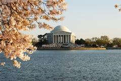 Flores de cereja na bacia maré Imagem de Stock
