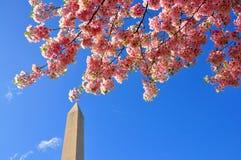 Flores de cerejeira Imagem de Stock
