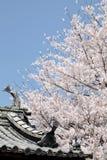 Flores de cerejeira Imagens de Stock Royalty Free