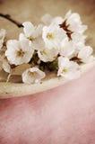 Flores de cerejeira Fotos de Stock Royalty Free