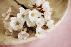 Flores de cerejeira Imagem de Stock Royalty Free