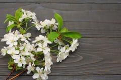 flores de cerejeira brancas no fundo de madeira escuro Vista superior Imagens de Stock