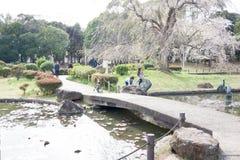Flores de cerejeira 2019 fotos de stock royalty free