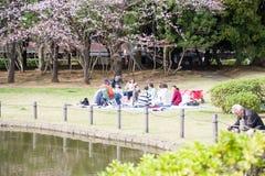 Flores de cerejeira 2019 fotografia de stock royalty free
