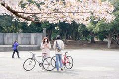 Flores de cerejeira 2019 fotografia de stock