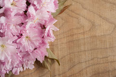 Flores de cerejeira cor-de-rosa de Kwanzan em um fundo de madeira com espaço da cópia Imagem de Stock Royalty Free