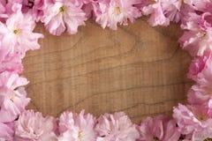 Flores de cerejeira cor-de-rosa de Kwanzan em um fundo de madeira com espaço da cópia Fotos de Stock Royalty Free