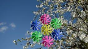 Flores de cerejeira da mola e brinquedo do moinho de vento video estoque