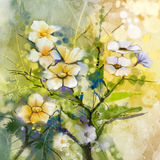 Flores de cerejeira da pintura da aquarela, cereja japonesa, Sakura cor-de-rosa Fotos de Stock
