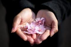 Flores de cerejeira de Kawazu fotografia de stock royalty free
