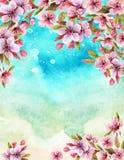 Flores de cerejeira do japonês da aquarela Imagem de Stock Royalty Free